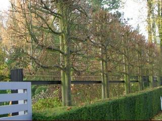 Frederic dumont cr ation entretien parc jardin for Entretien jardin bruxelles